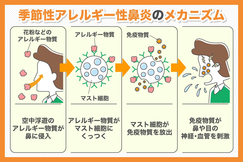 季節性アレルギー性鼻炎のメカニズム